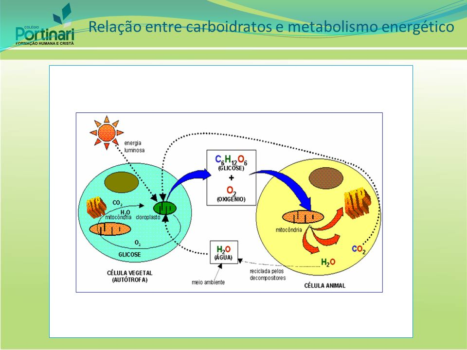 Relação entre carboidratos e metabolismo energético