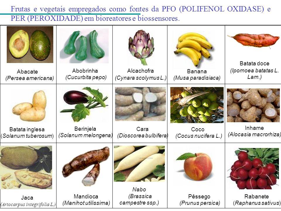 Inhame (Alocasia macrorhiza) Abacate (Persea americana) Batata inglesa (Solanum tuberosum) Frutas e vegetais empregados como fontes da PFO (POLIFENOL
