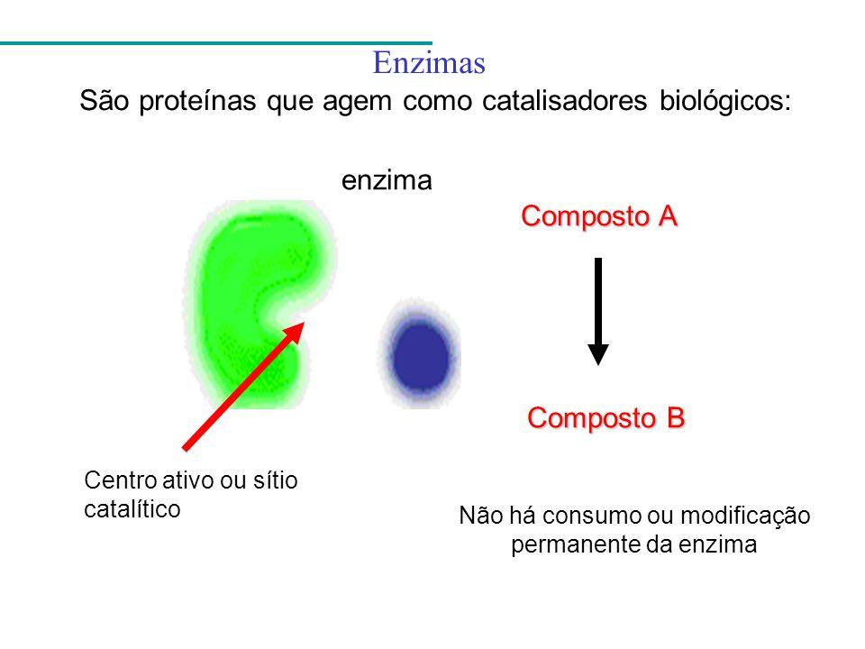 Enzimas São proteínas que agem como catalisadores biológicos: enzima Composto A Composto B Centro ativo ou sítio catalítico Não há consumo ou modifica