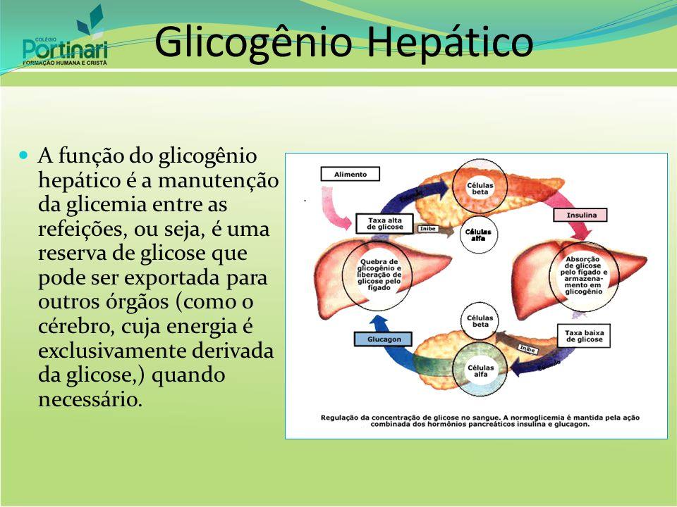 Glicogênio Hepático A função do glicogênio hepático é a manutenção da glicemia entre as refeições, ou seja, é uma reserva de glicose que pode ser expo