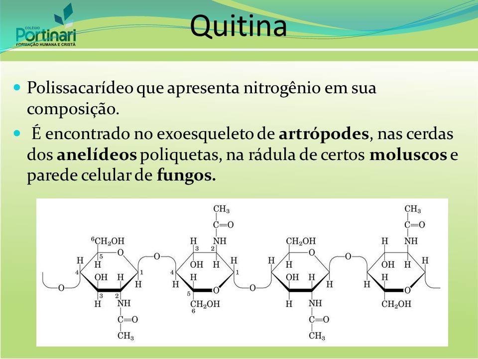 Quitina Polissacarídeo que apresenta nitrogênio em sua composição. É encontrado no exoesqueleto de artrópodes, nas cerdas dos anelídeos poliquetas, na