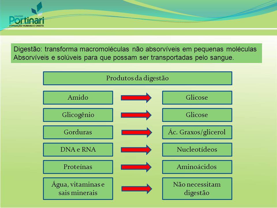 Digestão: transforma macromoléculas não absorvíveis em pequenas moléculas Absorvíveis e solúveis para que possam ser transportadas pelo sangue. Produt