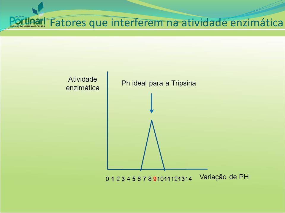 Fatores que interferem na atividade enzimática Atividade enzimática Variação de PH Ph ideal para a Tripsina 0 1 2 3 4 5 6 7 8 91011121314