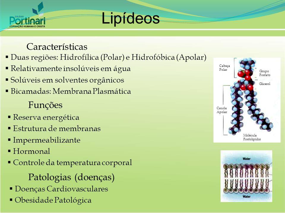 Características Duas regiões: Hidrofílica (Polar) e Hidrofóbica (Apolar) Relativamente insolúveis em água Solúveis em solventes orgânicos Bicamadas: M