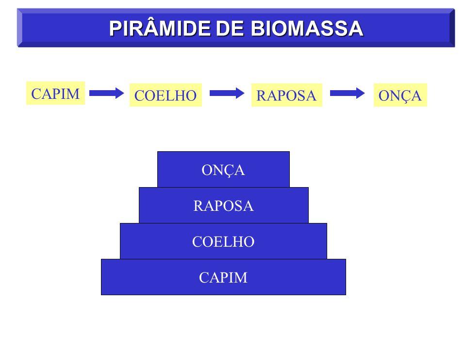PIRÂMIDE DE BIOMASSA CAPIM COELHORAPOSAONÇA CAPIM COELHO RAPOSA ONÇA