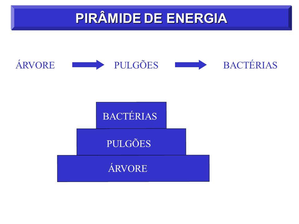 PIRÂMIDE DE ENERGIA ÁRVOREPULGÕESBACTÉRIAS ÁRVORE PULGÕES BACTÉRIAS