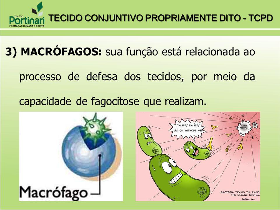 3) MACRÓFAGOS: sua função está relacionada ao processo de defesa dos tecidos, por meio da capacidade de fagocitose que realizam. TECIDO CONJUNTIVO PRO