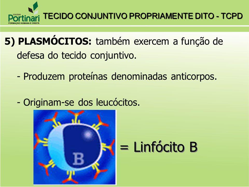 5) PLASMÓCITOS: também exercem a função de defesa do tecido conjuntivo. - Produzem proteínas denominadas anticorpos. - Originam-se dos leucócitos. = L