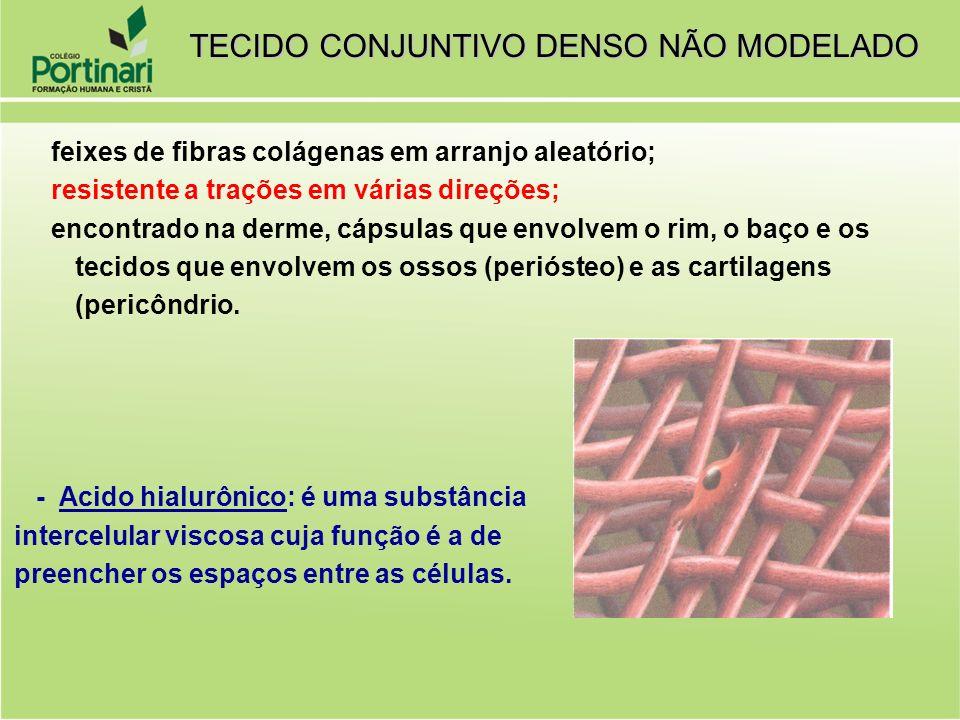  feixes de fibras colágenas em arranjo aleatório;  resistente a trações em várias direções;  encontrado na derme, cápsulas que envolvem o rim, o ba