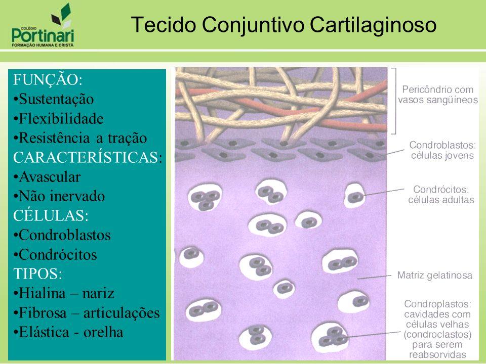 FUNÇÃO: Sustentação Flexibilidade Resistência a tração CARACTERÍSTICAS: Avascular Não inervado CÉLULAS: Condroblastos Condrócitos TIPOS: Hialina – nar