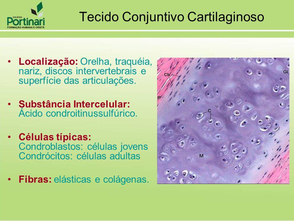 Localização: Orelha, traquéia, nariz, discos intervertebrais e superfície das articulações. Substância Intercelular: Ácido condroitinussulfúrico. Célu