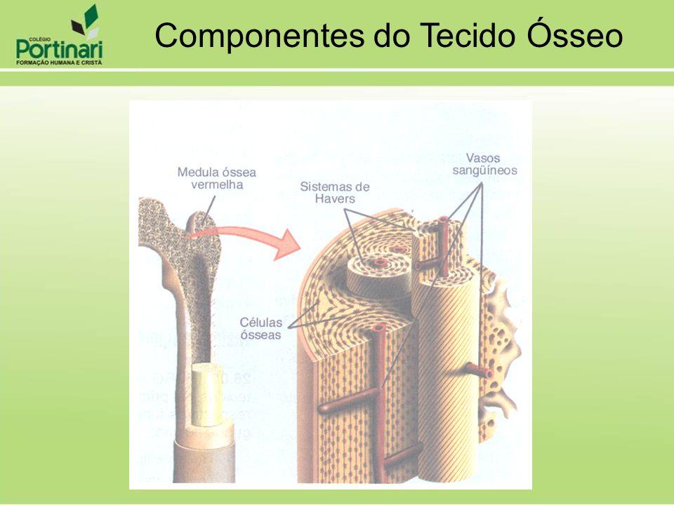 Componentes do Tecido Ósseo