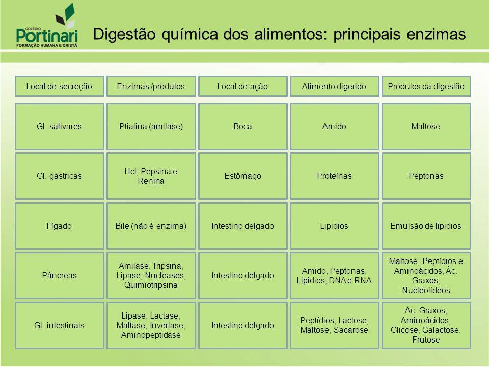 Local de secreçãoEnzimas /produtosLocal de açãoAlimento digeridoProdutos da digestão Gl. salivaresPtialina (amilase)BocaAmidoMaltose Gl. gástricas Hcl