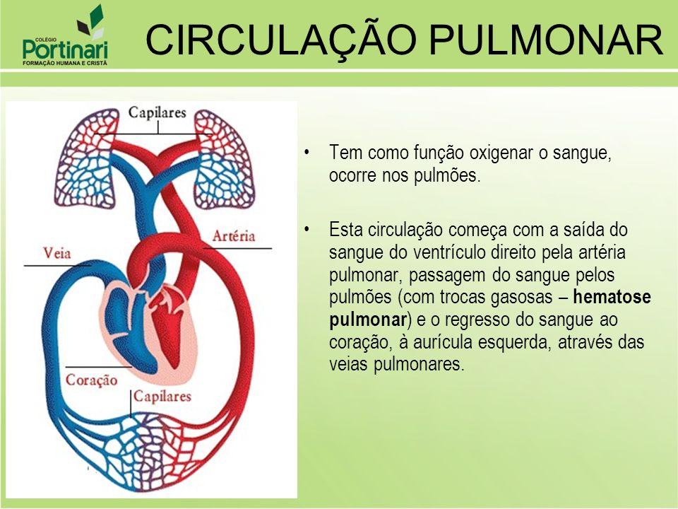 Tem como função oxigenar o sangue, ocorre nos pulmões. Esta circulação começa com a saída do sangue do ventrículo direito pela artéria pulmonar, passa