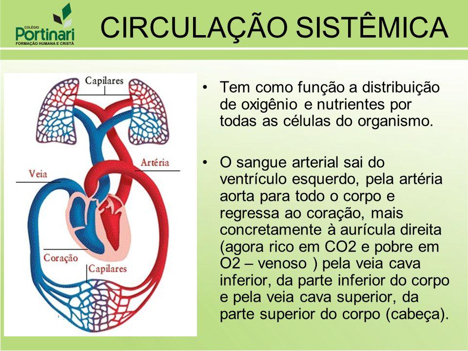 Tem como função a distribuição de oxigênio e nutrientes por todas as células do organismo. O sangue arterial sai do ventrículo esquerdo, pela artéria