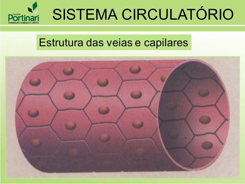 SISTEMA CIRCULATÓRIO Estrutura das veias e capilares