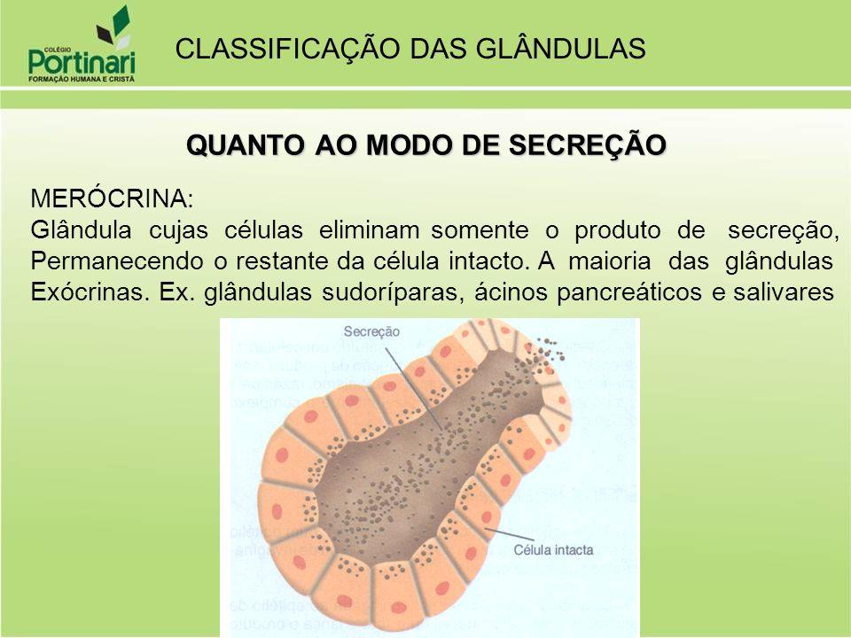 MERÓCRINA: Glândula cujas células eliminam somente o produto de secreção, Permanecendo o restante da célula intacto. A maioria das glândulas Exócrinas