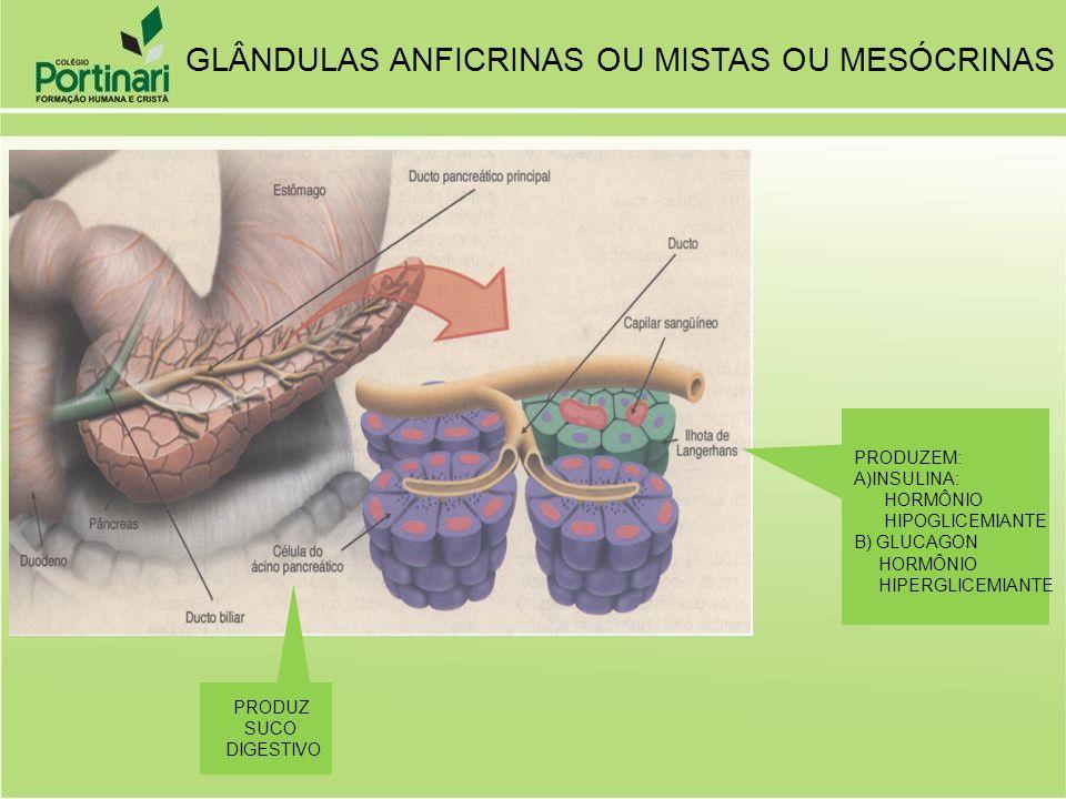 PRODUZ SUCO DIGESTIVO PRODUZEM: A)INSULINA: HORMÔNIO HIPOGLICEMIANTE B) GLUCAGON HORMÔNIO HIPERGLICEMIANTE