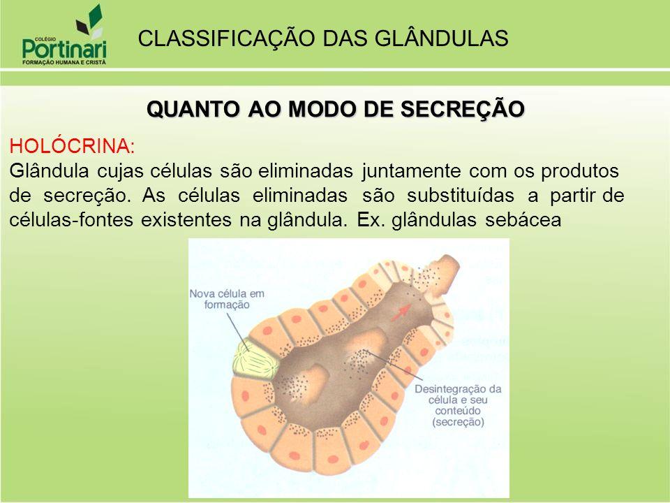 HOLÓCRINA: Glândula cujas células são eliminadas juntamente com os produtos de secreção. As células eliminadas são substituídas a partir de células-fo