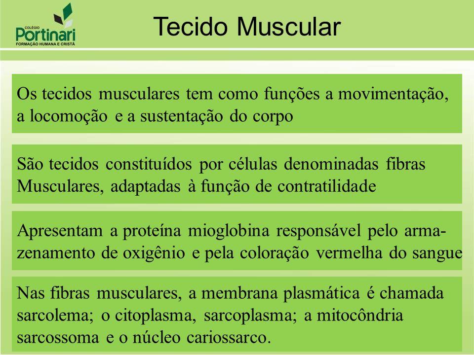 Os tecidos musculares tem como funções a movimentação, a locomoção e a sustentação do corpo São tecidos constituídos por células denominadas fibras Mu