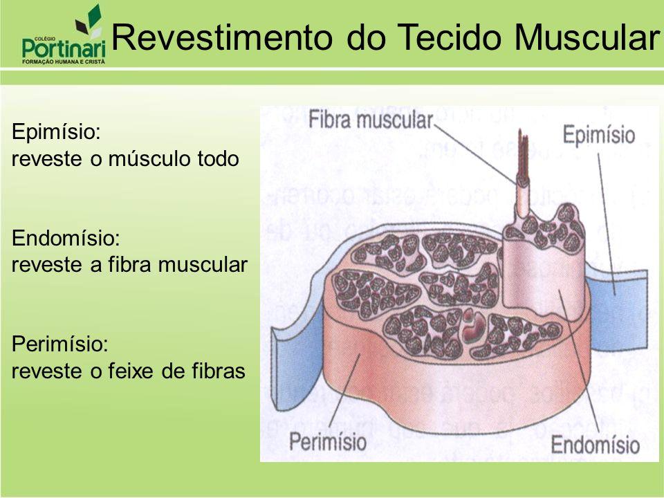 Fibras fusiformes Fibras mononucleadas Contração lenta e fraca Contração involuntária LOCALIZAÇÃO: Parede do tubo digestivo Vias respiratórias Vias genitourinárias Vasos sangüíneos Útero Eretores dos pêlos e cílios Tecido Muscular Liso