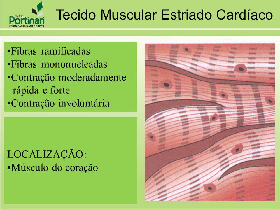 Fibras ramificadas Fibras mononucleadas Contração moderadamente rápida e forte Contração involuntária LOCALIZAÇÃO: Músculo do coração Tecido Muscular