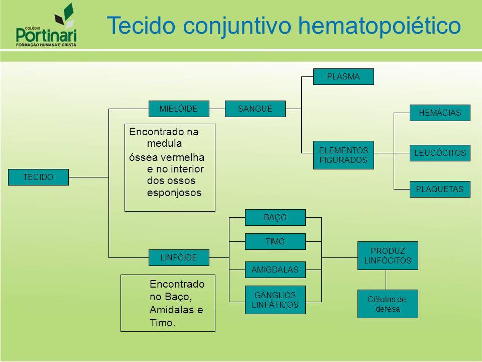 Correspondem aos menores Leucócitos Linfócito T – são responsáveis pela identificação de partículas estranhas no organismo Linfócito B – formam plasmócitos responsáveis pela produção de anticorpos Leucócito linfócito e plasmócito