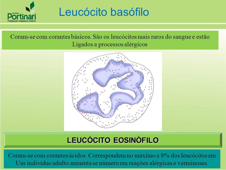 Coram-se com corantes básicos. São os leucócitos mais raros do sangue e estão Ligados a processos alérgicos Coram-se com corantes ácidos. Correspondem