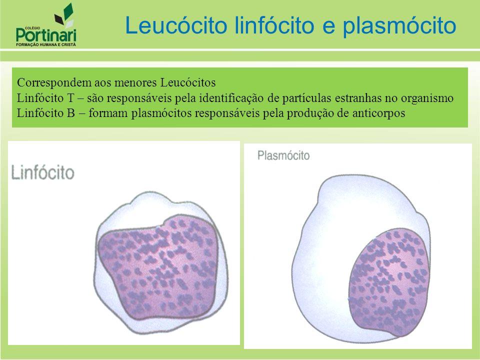 Correspondem aos menores Leucócitos Linfócito T – são responsáveis pela identificação de partículas estranhas no organismo Linfócito B – formam plasmó