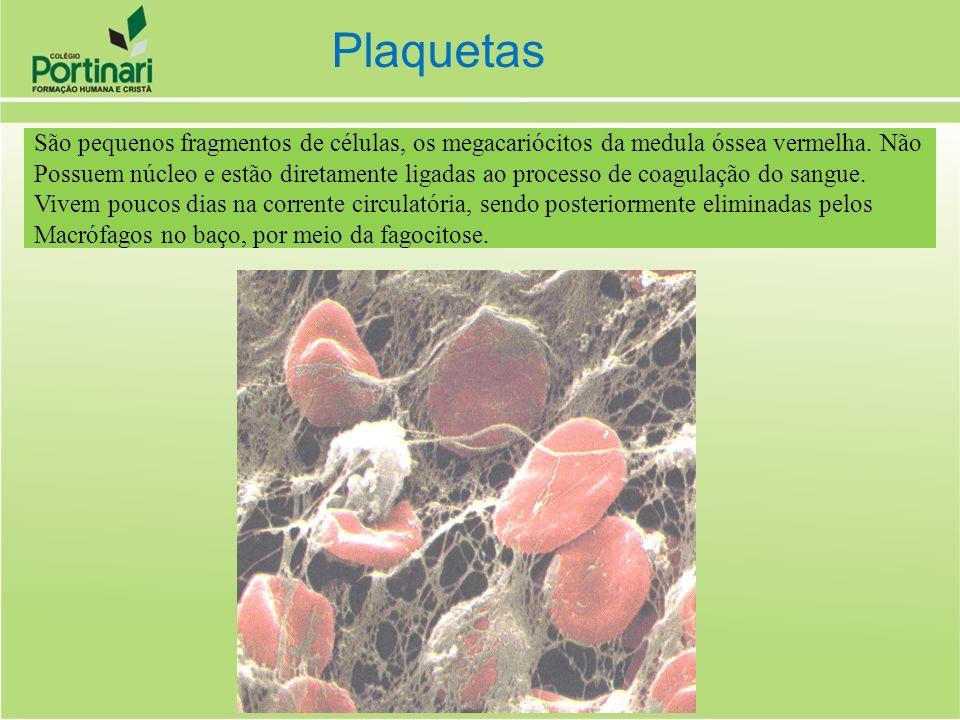 São pequenos fragmentos de células, os megacariócitos da medula óssea vermelha. Não Possuem núcleo e estão diretamente ligadas ao processo de coagulaç