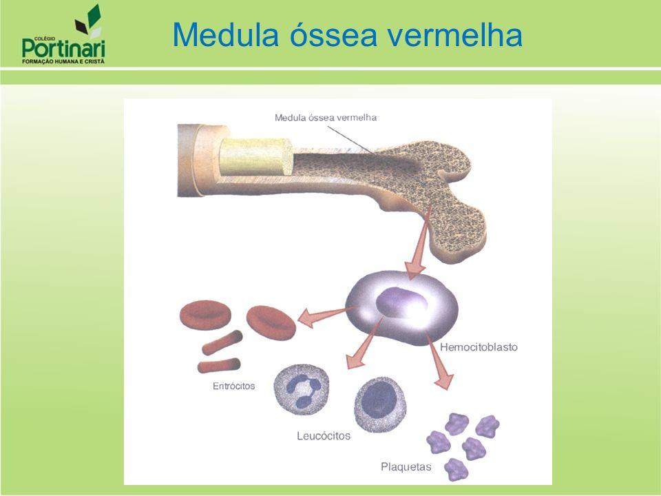 TECIDOS DANIFICADOSPLAQUETAS TROMBOPLASTINA PROTROMBINATROMBINA FIBRINOGÊNIOFIBRINA Cálcio Ativa Cálcio Ativa Coagulação sanguínea