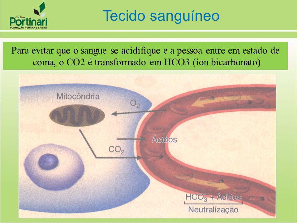 Para evitar que o sangue se acidifique e a pessoa entre em estado de coma, o CO2 é transformado em HCO3 (íon bicarbonato) Tecido sanguíneo