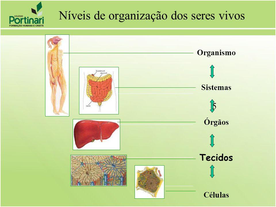 Níveis de organização dos seres vivos Organismo Sistemas Órgãos Tecidos Células 5