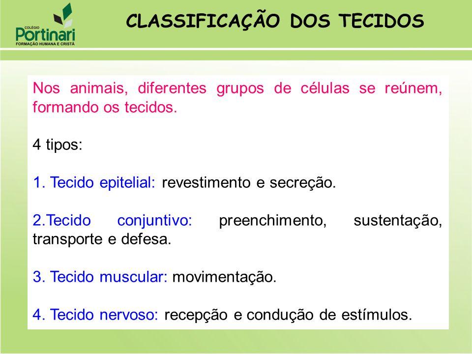 Nos animais, diferentes grupos de células se reúnem, formando os tecidos. 4 tipos: 1. Tecido epitelial: revestimento e secreção. 2.Tecido conjuntivo: