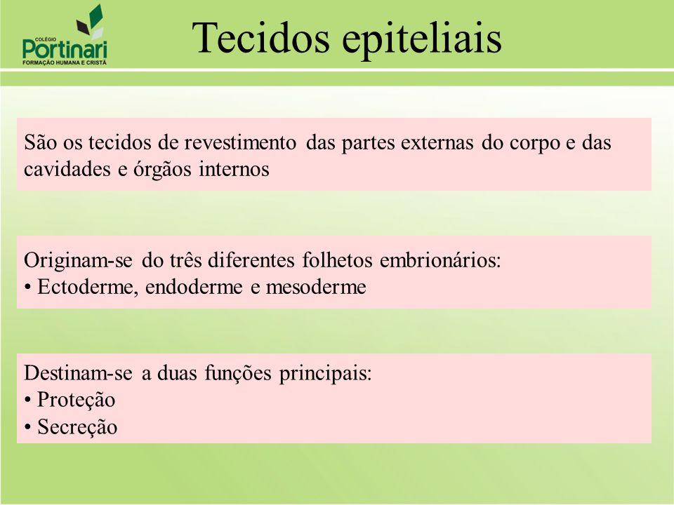 São os tecidos de revestimento das partes externas do corpo e das cavidades e órgãos internos Destinam-se a duas funções principais: Proteção Secreção