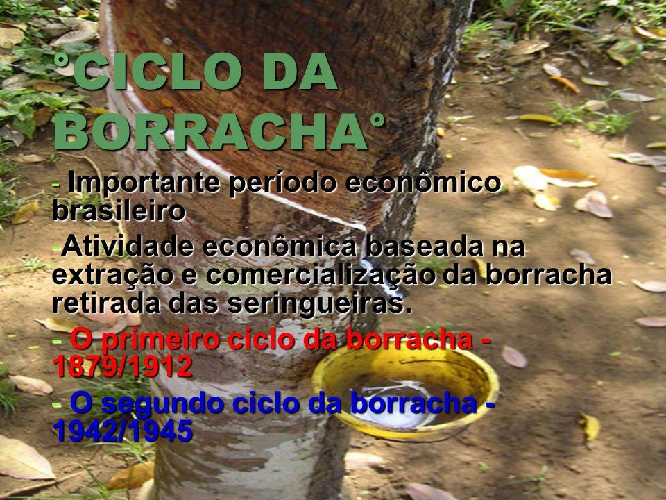 °CICLO DA BORRACHA° - Importante período econômico brasileiro -Atividade econômica baseada na extração e comercialização da borracha retirada das seri