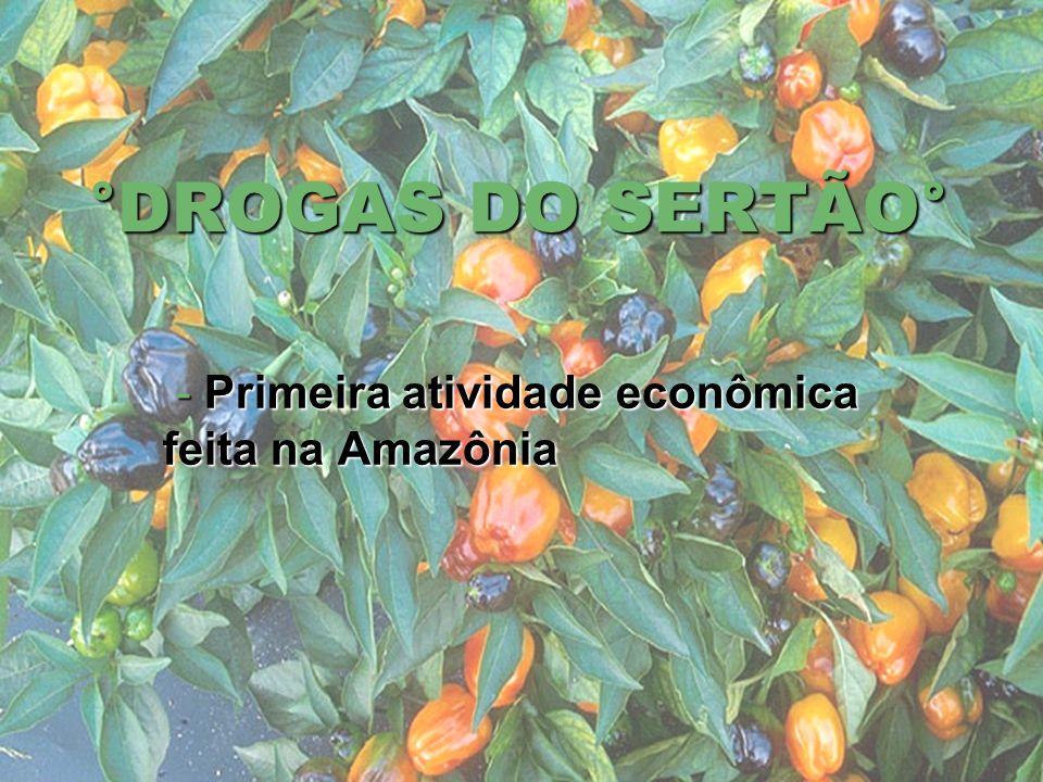 °DROGAS DO SERTÃO° - Primeira atividade econômica feita na Amazônia - Primeira atividade econômica feita na Amazônia