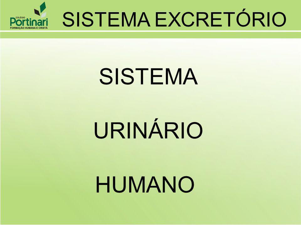 SISTEMA URINÁRIO HUMANO SISTEMA EXCRETÓRIO