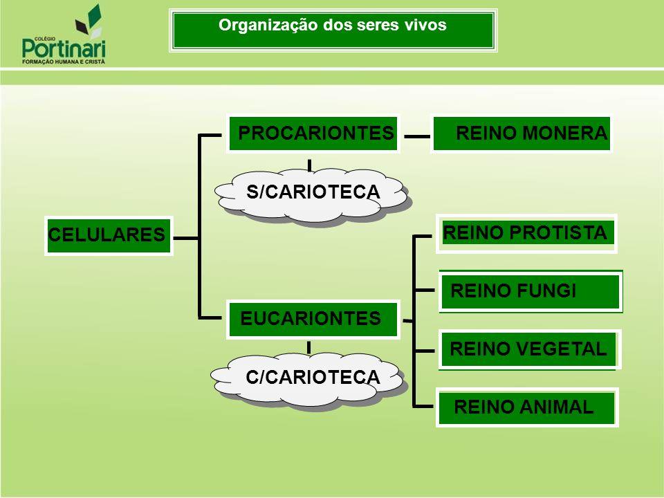 S/CARIOTECA REINO PROTISTA REINO FUNGI REINO VEGETAL REINO ANIMAL CELULARESPROCARIONTES EUCARIONTES C/CARIOTECA REINO MONERA