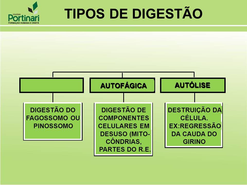 DIGESTÃO DO FAGOSSOMO OU PINOSSOMO DIGESTÃO DE COMPONENTES CELULARES EM DESUSO (MITO- CÔNDRIAS, PARTES DO R.E. HETEROFÁGICA AUTOFÁGICA DESTRUIÇÃO DA C