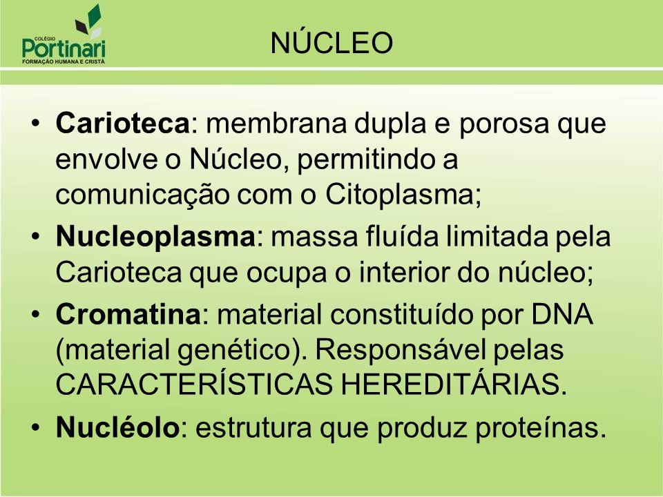 Carioteca: membrana dupla e porosa que envolve o Núcleo, permitindo a comunicação com o Citoplasma; Nucleoplasma: massa fluída limitada pela Carioteca