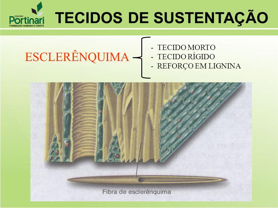 ESCLERÊNQUIMA - TECIDO MORTO - TECIDO RÍGIDO - REFORÇO EM LIGNINA TECIDOS DE SUSTENTAÇÃO