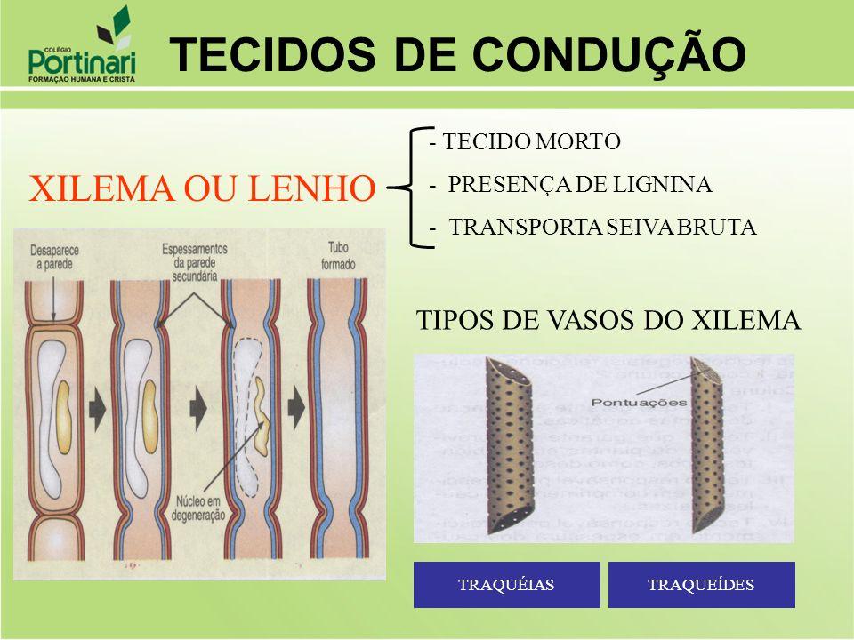 XILEMA OU LENHO - TECIDO MORTO - PRESENÇA DE LIGNINA - TRANSPORTA SEIVA BRUTA TIPOS DE VASOS DO XILEMA TRAQUÉIASTRAQUEÍDES TECIDOS DE CONDUÇÃO