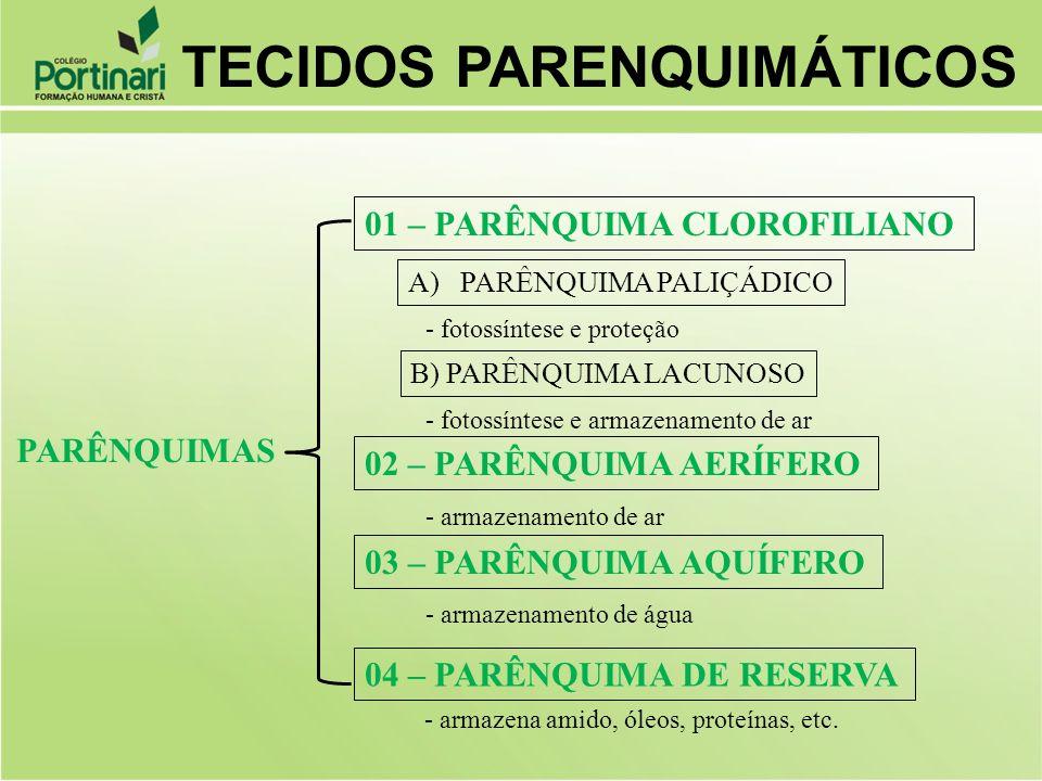 PARÊNQUIMAS 01 – PARÊNQUIMA CLOROFILIANO 02 – PARÊNQUIMA AERÍFERO 03 – PARÊNQUIMA AQUÍFERO 04 – PARÊNQUIMA DE RESERVA A)PARÊNQUIMA PALIÇÁDICO B) PARÊN