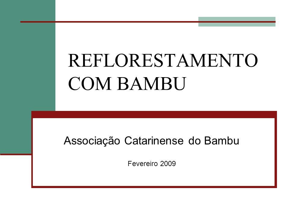 REFLORESTAMENTO COM BAMBU Associação Catarinense do Bambu Fevereiro 2009