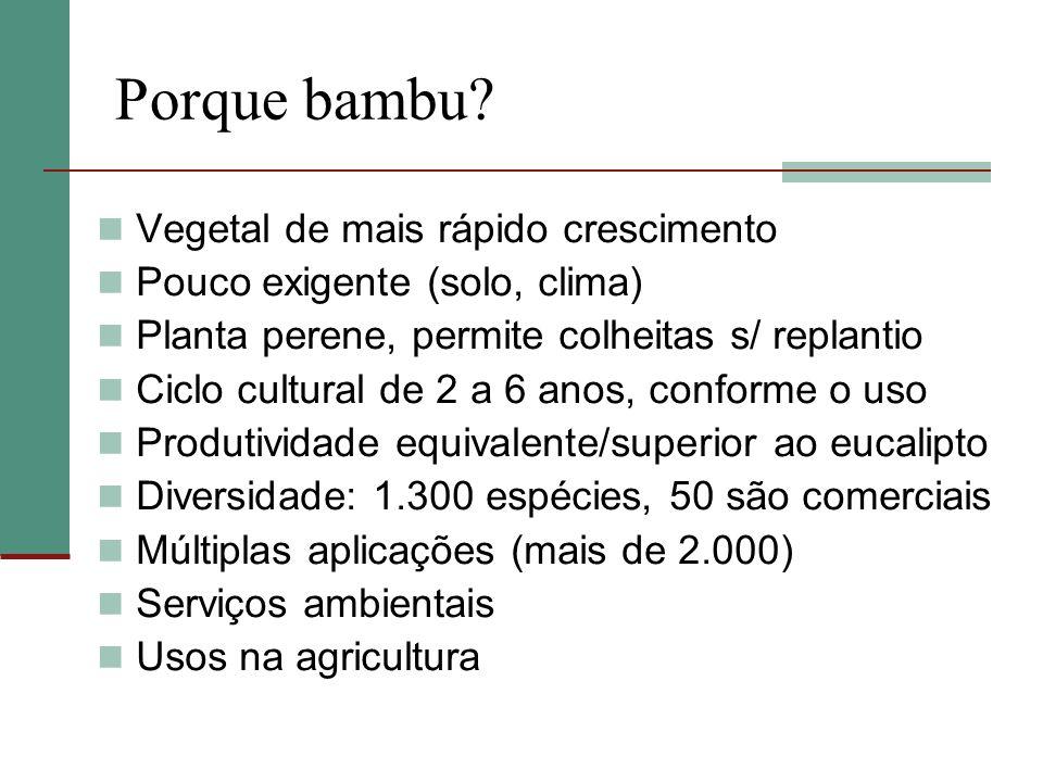 Porque bambu? Vegetal de mais rápido crescimento Pouco exigente (solo, clima) Planta perene, permite colheitas s/ replantio Ciclo cultural de 2 a 6 an