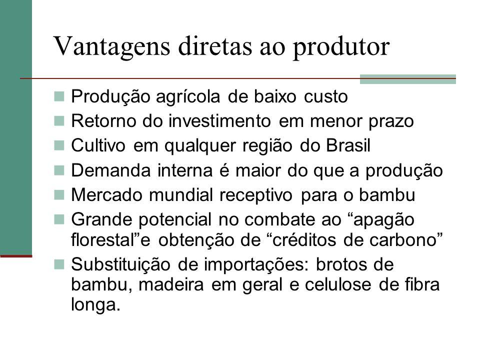 Vantagens diretas ao produtor Produção agrícola de baixo custo Retorno do investimento em menor prazo Cultivo em qualquer região do Brasil Demanda int
