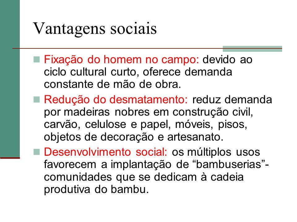 Vantagens sociais Fixação do homem no campo: devido ao ciclo cultural curto, oferece demanda constante de mão de obra. Redução do desmatamento: reduz