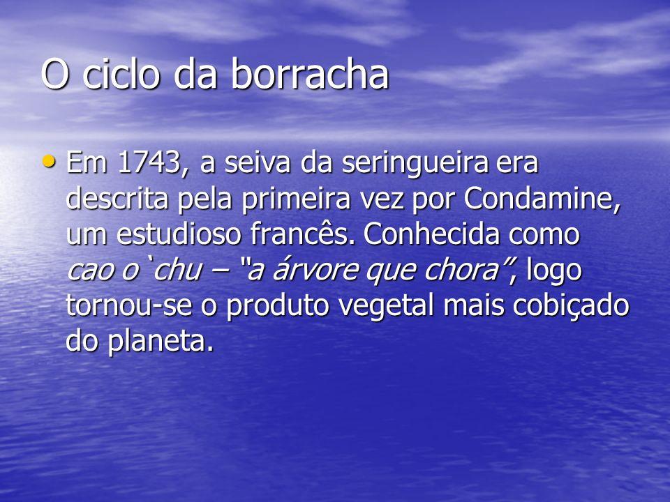 O ciclo da borracha Em 1743, a seiva da seringueira era descrita pela primeira vez por Condamine, um estudioso francês. Conhecida como cao o`chu – a á