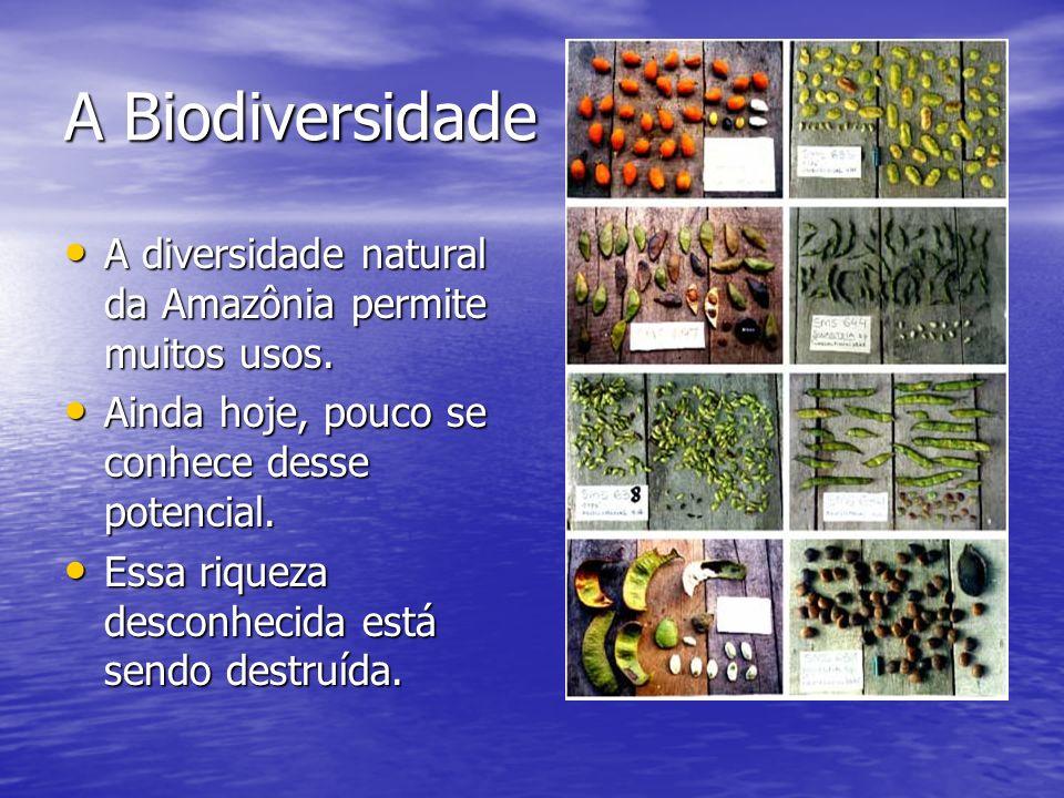 A Biodiversidade A diversidade natural da Amazônia permite muitos usos. A diversidade natural da Amazônia permite muitos usos. Ainda hoje, pouco se co